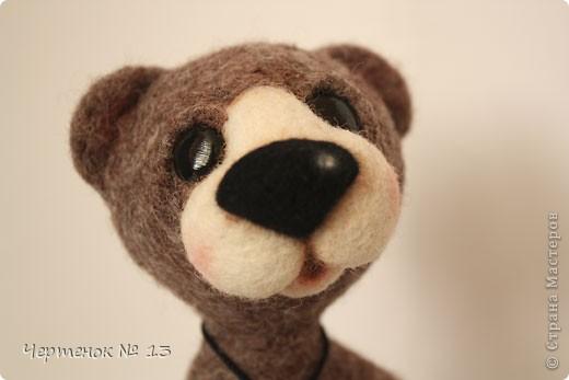 Новый медвежонок по имени Биме. С ирландского оно означает: медведь, карий. фото 2