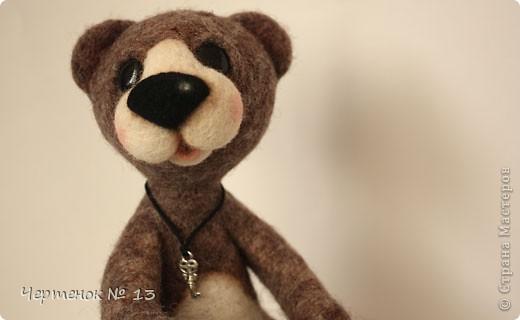 Новый медвежонок по имени Биме. С ирландского оно означает: медведь, карий. фото 3