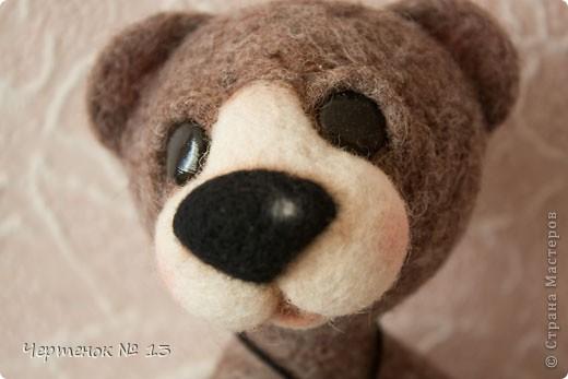 Новый медвежонок по имени Биме. С ирландского оно означает: медведь, карий. фото 1