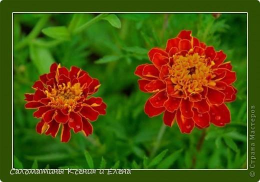 Расцветка нашего бактуса напоминает самые осенние цветы- бархатцы! фото 11
