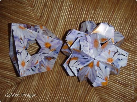 Passiflora  фото 6