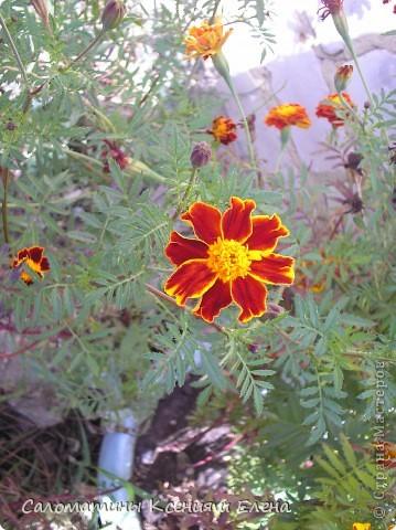 Расцветка нашего бактуса напоминает самые осенние цветы- бархатцы! фото 12