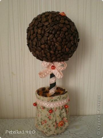 Кофейное дерево №5!!!!! фото 1