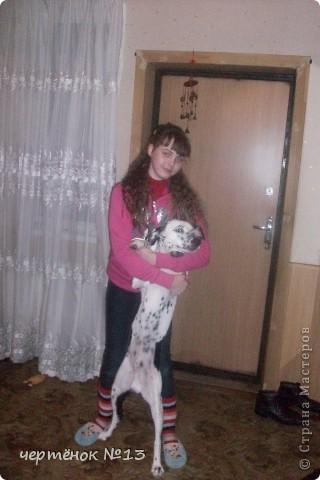 это мой пёсик Ричи он родился 19 мая 2009 года фото 6