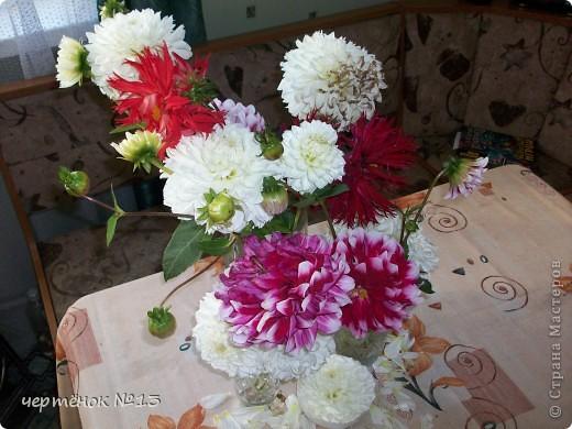 вот такой подарок от бабушки мы привезли из деревни  фото 2