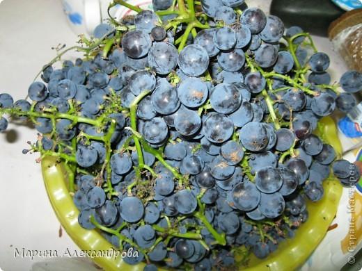 наш синий виноград....гроздь... фото 2