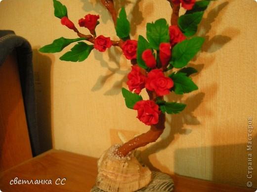 Розовый кустик в ракушке на Ваш суд  девочки. фото 3