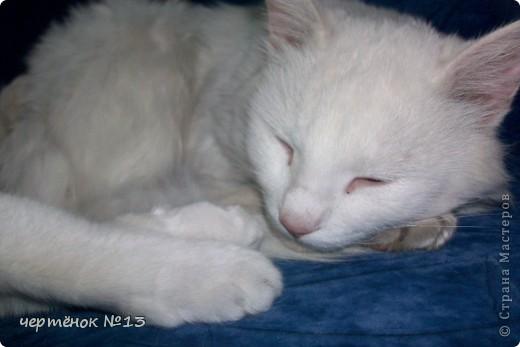 это мой пёсик Ричи он родился 19 мая 2009 года фото 17