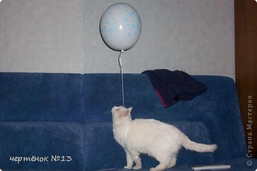 это мой пёсик Ричи он родился 19 мая 2009 года фото 11