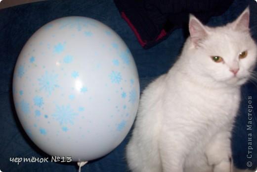 это мой пёсик Ричи он родился 19 мая 2009 года фото 10