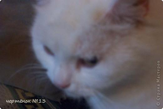 это мой пёсик Ричи он родился 19 мая 2009 года фото 12