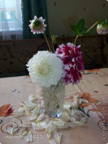 вот такой подарок от бабушки мы привезли из деревни  фото 7