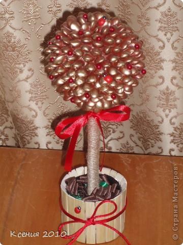 Фасоляное дерево фото 2