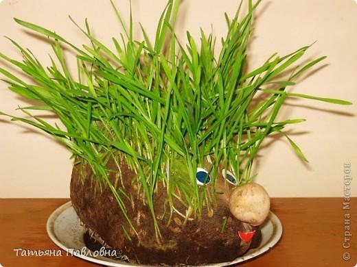 Зелень натуральная. фото 2