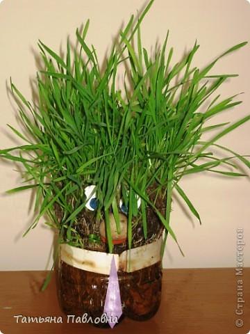 Зелень натуральная. фото 3