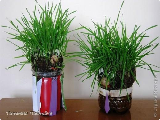 Зелень натуральная. фото 1