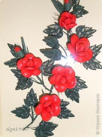 Очень долго смотрела на розы и вот решилась. фото 1