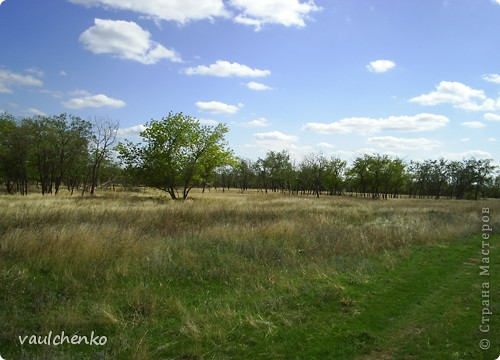 Мой поселок - Верхнезареченский (раньше назывался Селезнев Бугор) - северная окраина Волгограда.  Дальше  - степь...  фото 3