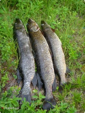 Решили мы отдохнуть на карельских озерах. Рыбки половить. Пожить в почти диких местах. Дорога встретила нас неласково и ничего хорошего не предвещала. фото 20