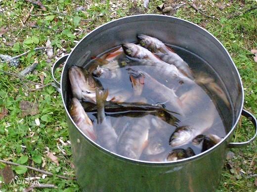 Решили мы отдохнуть на карельских озерах. Рыбки половить. Пожить в почти диких местах. Дорога встретила нас неласково и ничего хорошего не предвещала. фото 25