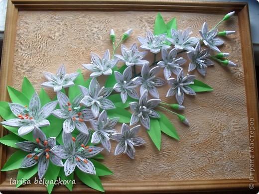 Лилии на заказ фото 1