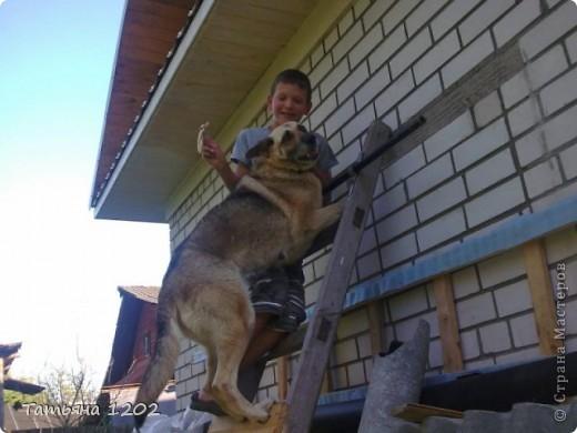 Мой внук Артем очень любит своих домашних питомцев.Дома живут собака-Лада и два кота-Шиша и Рыся.Это его наблюдения за своими питомцами. Много их фотографирует,играет с ними.Вам на суд представляю его работу. фото 1