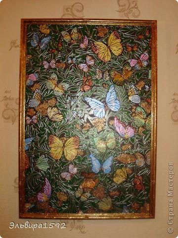 были скучные бледные бабочки и вот что получилось в последствии. фото 1