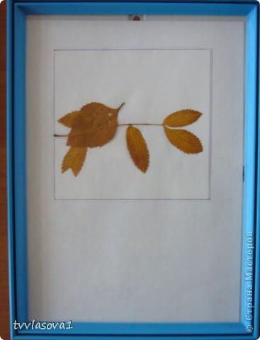 здесь испльзованы оттиски листьев для создания осеннего леса.Быстро,просто,интересно!Олесина работа... фото 6