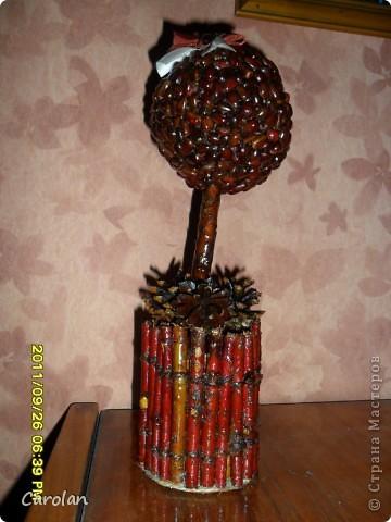 Дерево из кедровых орехов фото 2