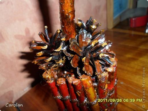 Дерево из кедровых орехов фото 3
