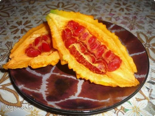 В прошлом году меня угостили интересным то ли фруктом, то ли овощем. Семена собрала и весной высадила. Вот такая лиана теперь растет во дворе. В интернете нашла несколько статей про мормордику.  Momordica charantia - растение, найденное в Китае, где оно известно под названием китайская горькая дыня. Она использовалась в традиционной китайской медицине как стимулятор аппетита, лекарство при желудочно-кишечной инфекции и для снижения уровня сахара в крови у диабетиков. Недавно она также начала использоваться при лечении некоторых типов рака и вирусных инфекций.  фото 5