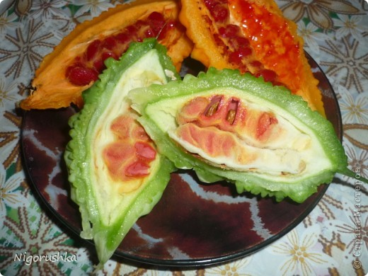 В прошлом году меня угостили интересным то ли фруктом, то ли овощем. Семена собрала и весной высадила. Вот такая лиана теперь растет во дворе. В интернете нашла несколько статей про мормордику.  Momordica charantia - растение, найденное в Китае, где оно известно под названием китайская горькая дыня. Она использовалась в традиционной китайской медицине как стимулятор аппетита, лекарство при желудочно-кишечной инфекции и для снижения уровня сахара в крови у диабетиков. Недавно она также начала использоваться при лечении некоторых типов рака и вирусных инфекций.  фото 7