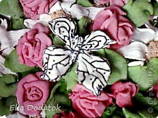 мои бабочки фото 1