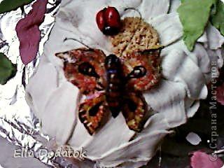 мои бабочки фото 5