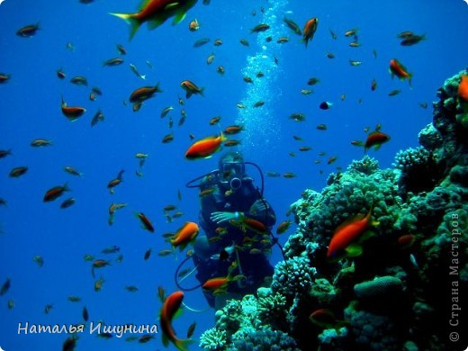 Думаю что Египтом не удивишь никого. Да и, после революции, страна не та! Не стала даже выставлять Хургаду.... Что всегда восхищает-это Красное море и природа.  Вот решила поделится красотой, которая запомнилась мне. На этой фотографии не я, приятельница!  я так и не опустилась с аквалангом. Но красота............ фото 1