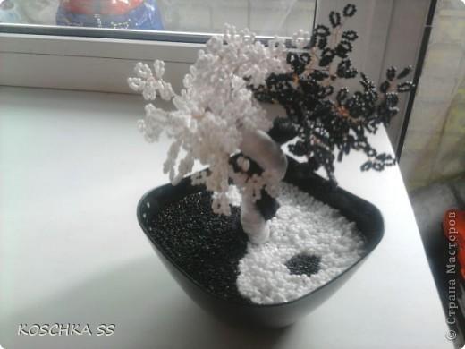дерево Инь-Янь