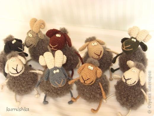 беедные овечки фото 1