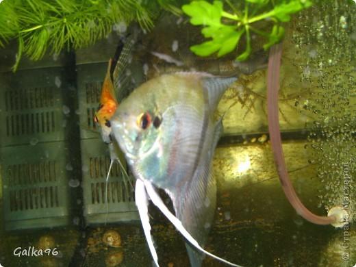 Мое семейство можно посмотреть здесь http://stranamasterov.ru/node/220343 Вот она)) наш новый друг, ее зовут Лампочка, да да я не ошиблась просто мы как ее увидели сразу же сказали какая лапочка, вот мы ее и назвали Лампочка))) фото 6