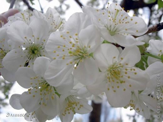 Здравствуйте!Хочу показать небольшую работу,которая называется цветение вишни.Ну вот,осень на дворе-а у меня весна!Работа небольшая,извините за качество фото.В жизни она не такая яркая,и смотрится мило)) фото 5
