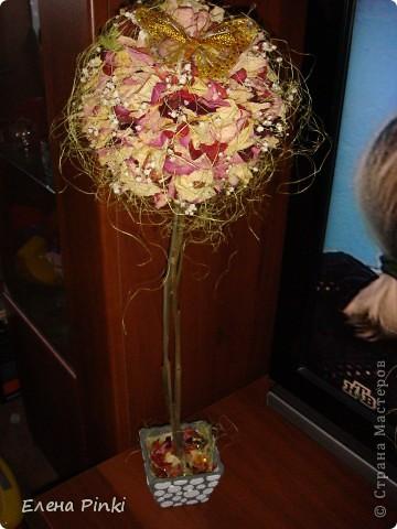 Добрый вечер!!Вот выросло у меня еще одно розовое деревце, в этот раз уже на день рождение фото 1