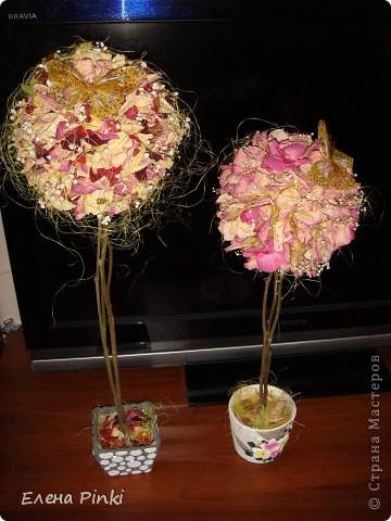 Добрый вечер!!Вот выросло у меня еще одно розовое деревце, в этот раз уже на день рождение фото 2