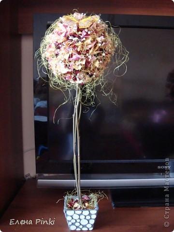 Добрый вечер!!Вот выросло у меня еще одно розовое деревце, в этот раз уже на день рождение фото 4