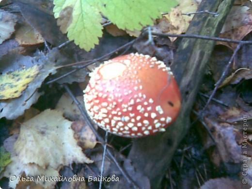 Сегодня ходила по грибы. фото 9