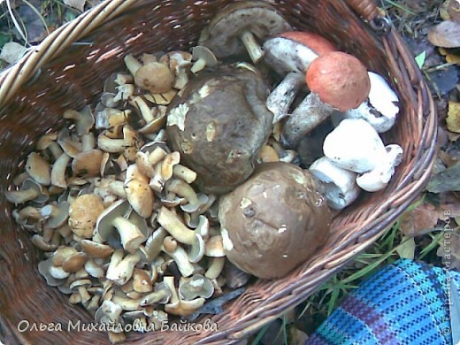 Сегодня ходила по грибы. фото 12