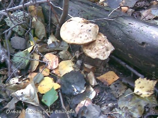 Сегодня ходила по грибы. фото 13