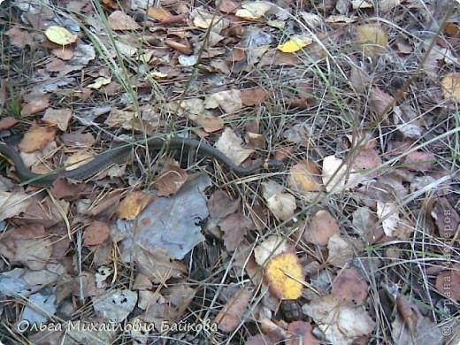 Сегодня ходила по грибы. фото 17