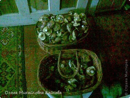Сегодня ходила по грибы. фото 19
