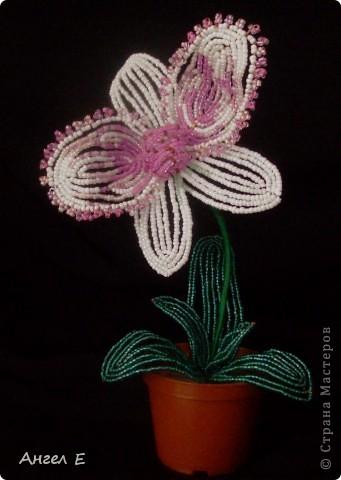 Поделка изделие Бисероплетение цветы из бисера Бисер Гипс Нитки Проволока.