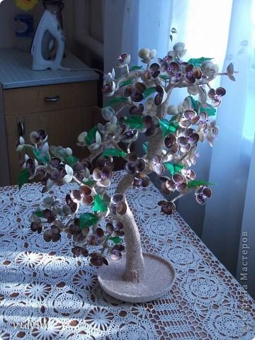 крупные деревья из морских ракушек  высота более 50 см фото 2
