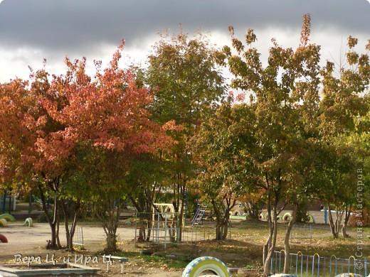 Художник покрасил листья на деревьях. фото 1